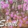{Diary} BACK IN SEOUL