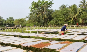 5 random things you should do in Vietnam