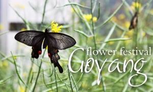 Goyang Flower Festival
