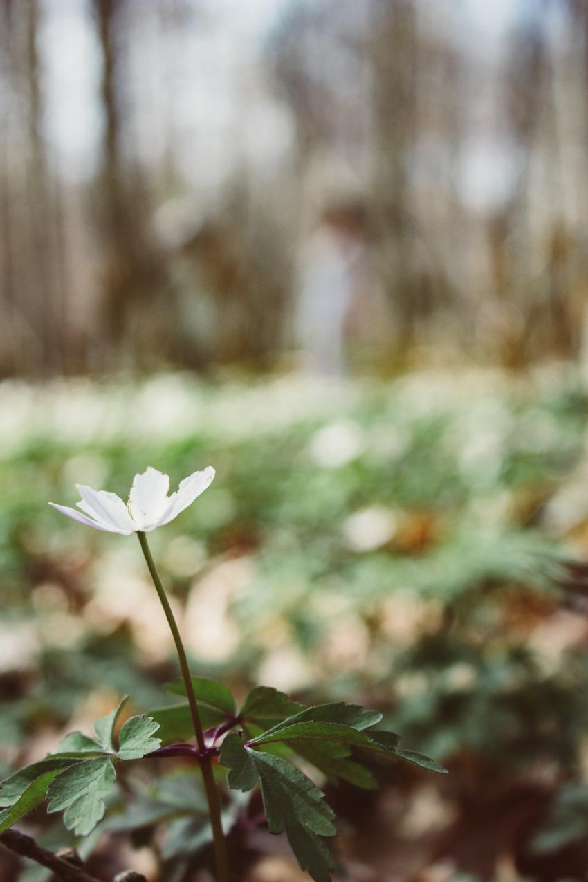Frühlingsgefühle Am Ende wird alles gut